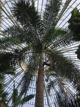 PalmCourt