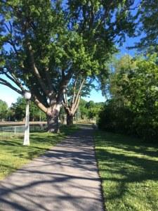 Walk-StrathconaStart